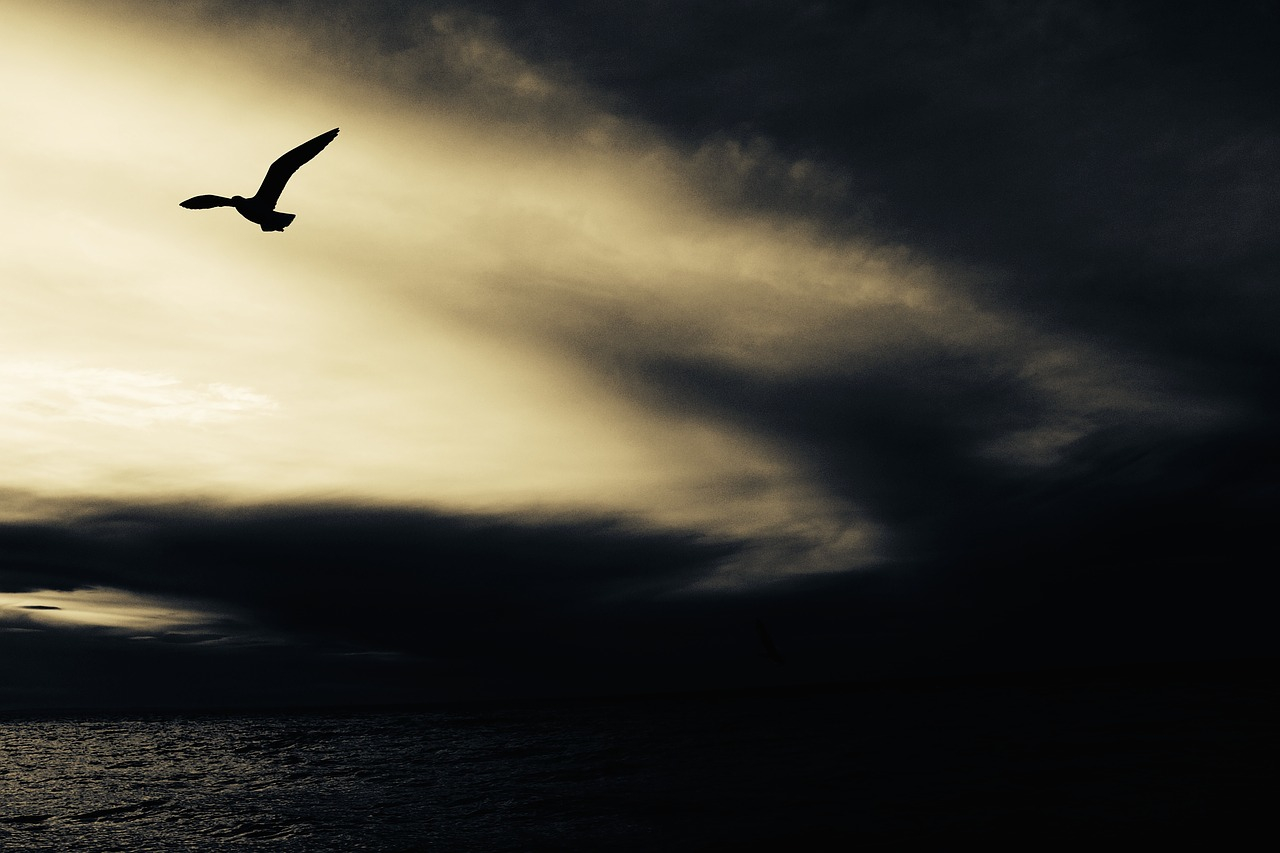seagull in the storm
