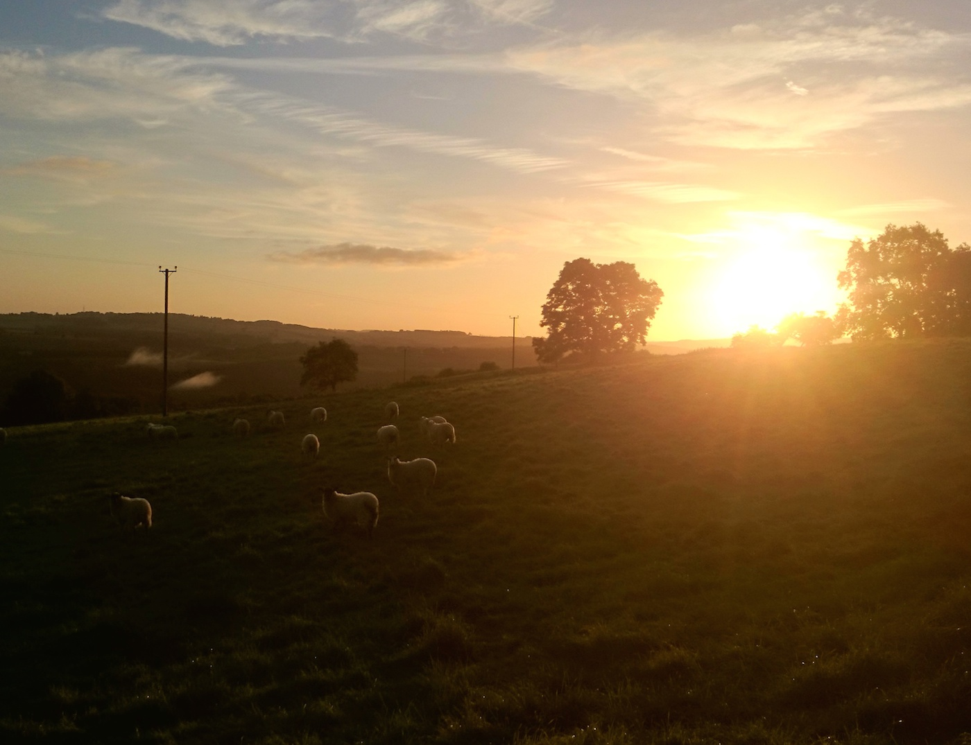 sheep-at-sunrise