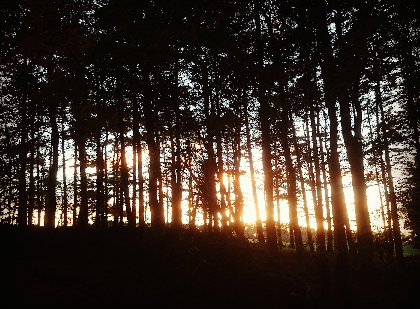 sunset-through-trees